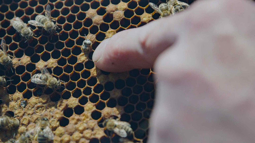 crescita apicoltori arnie